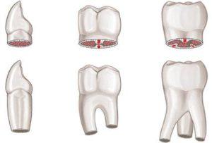 Несколько типов зубов.